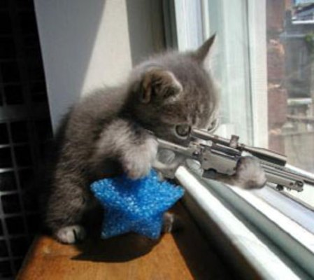 Cutest... and Deadliest Sniper Ever!   MEOW MUTHA FUCKA YOU DEAD!