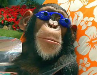 I looked for 30 minutes to find a monkey with old person glasses on and couldn't...but this monkey doesn't care. Neither do you...this is awesome as is...your welcome