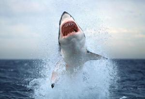mbn_shark_wideweb__470x321,0
