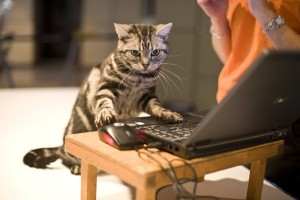 Cat surfing the net