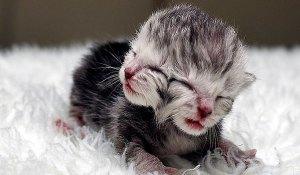 Two Faced Kitten