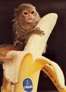 Baby monkey with banana