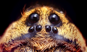 Spiders Eyes